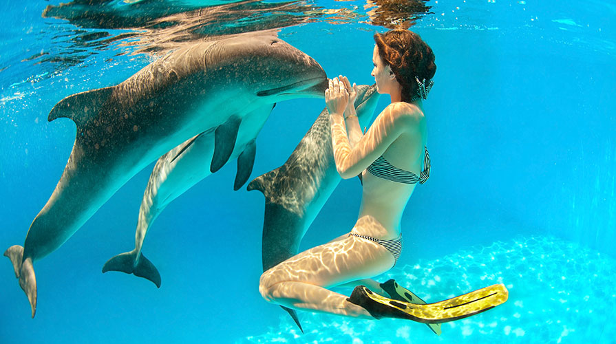 Discovery Cove at Orlando, Florida Resort