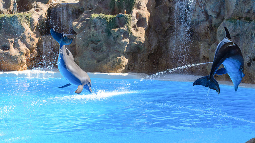 SeaWorld at Orlando, Florida Resort